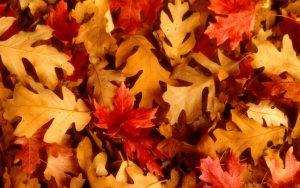 knutselen-met-herfstbladeren